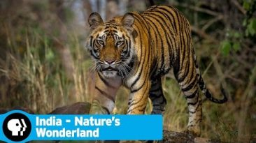 INDIA – NATURE'S WONDERLAND | Official Trailer | PBS