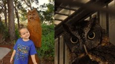 Toddler Loves Owls – India Learns About Birds – Nature Park (Part 1)