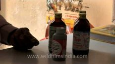 People actually buy and drink cow urine in India??