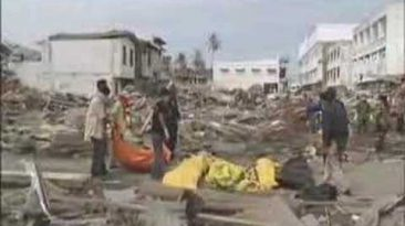 NATURE   Can Animals Predict Disaster?   Eyewitnesses   PBS